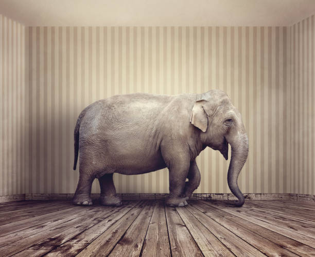 elefanten im zimmer  - raumideen stock-fotos und bilder