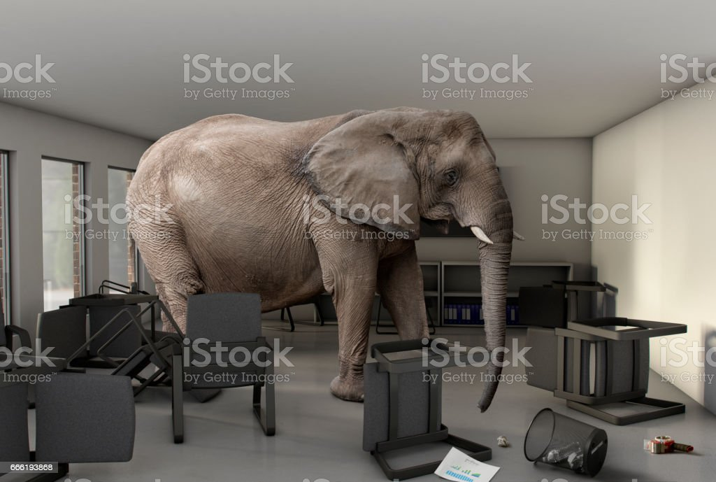 Elephant in the Room stock photo