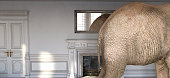 An Elephant in the room of an 18th Century French Chateau