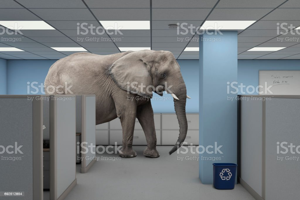 Elephant in the room work office stock photo