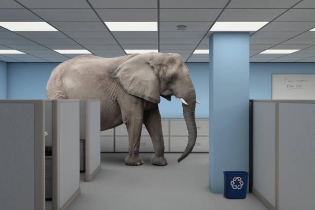 elefant im raum arbeiten büro - raumideen stock-fotos und bilder