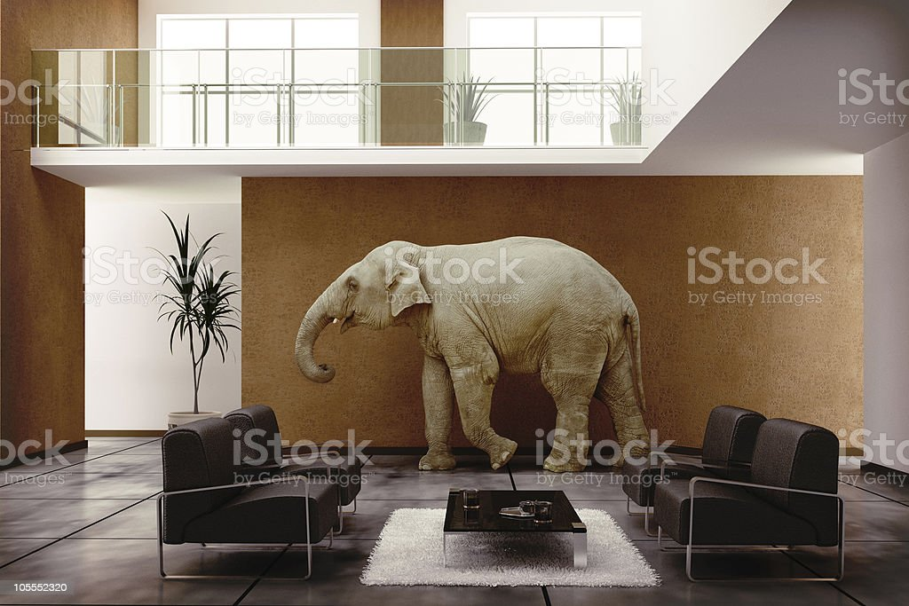 elephant indoor stock photo