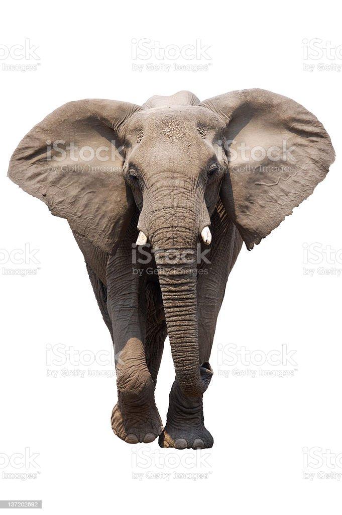 Elefanten Isoliert Lizenzfreies stock-foto