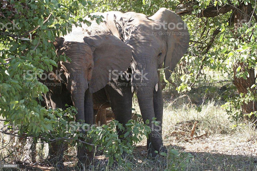 Слон ребенок Стоковые фото Стоковая фотография