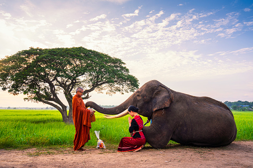 Elephant made merit a monk's bowl. Young woman and elephants are making merit. Thai people and elephant jointly give alm to monk. elephant and Monk in forest.