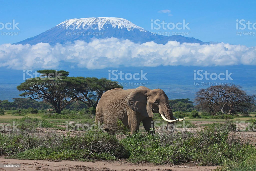 Elephant matriarch in front of Mount Kilimanjaro, Kenya stock photo