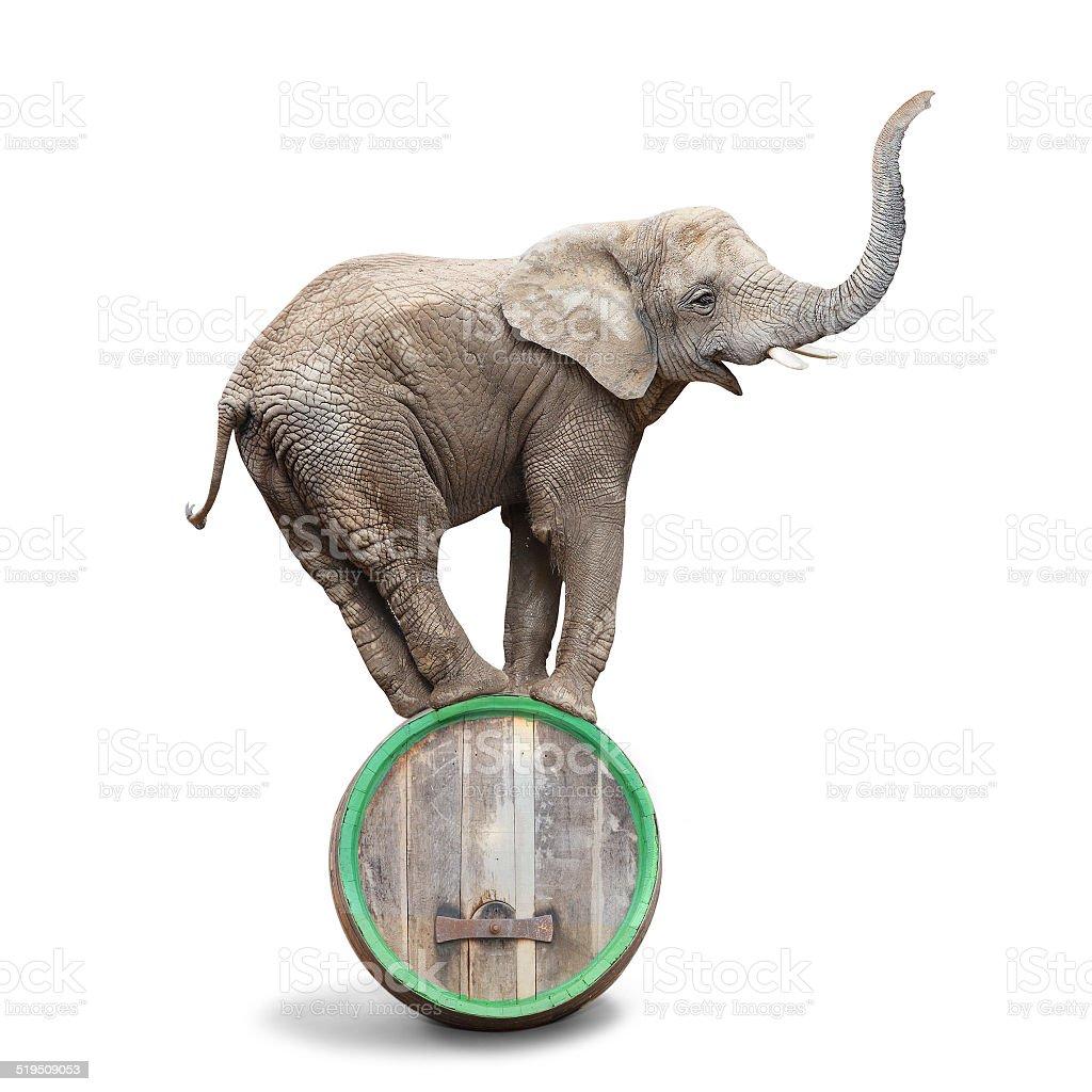 Elephant on a barrel. stock photo
