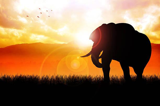 elefant auf der wunderschönen landschaft - elefanten umriss stock-fotos und bilder