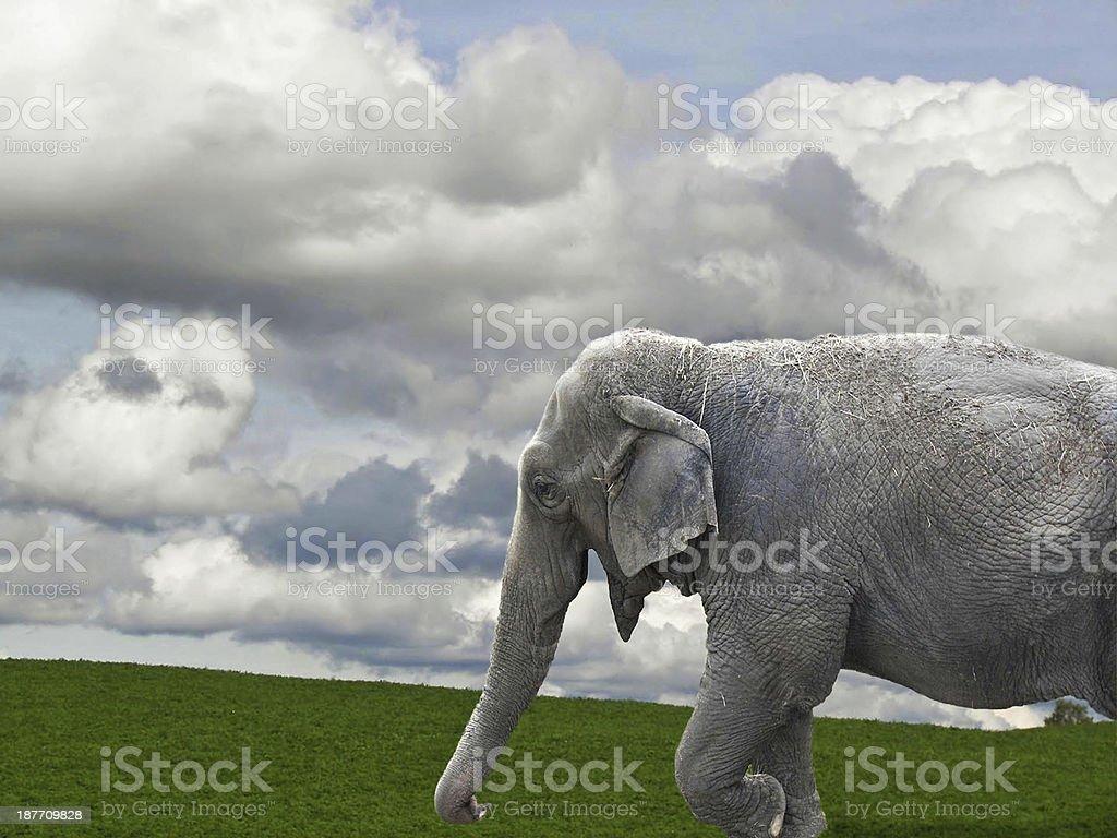 elephant on grass royalty-free stock photo