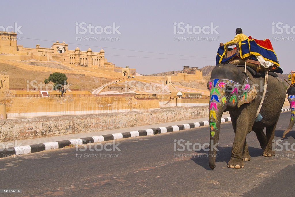 Elephant On The Road royalty-free stock photo
