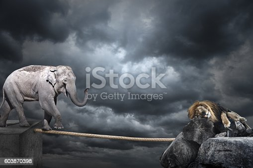 istock Elephant on tightrope 603870398