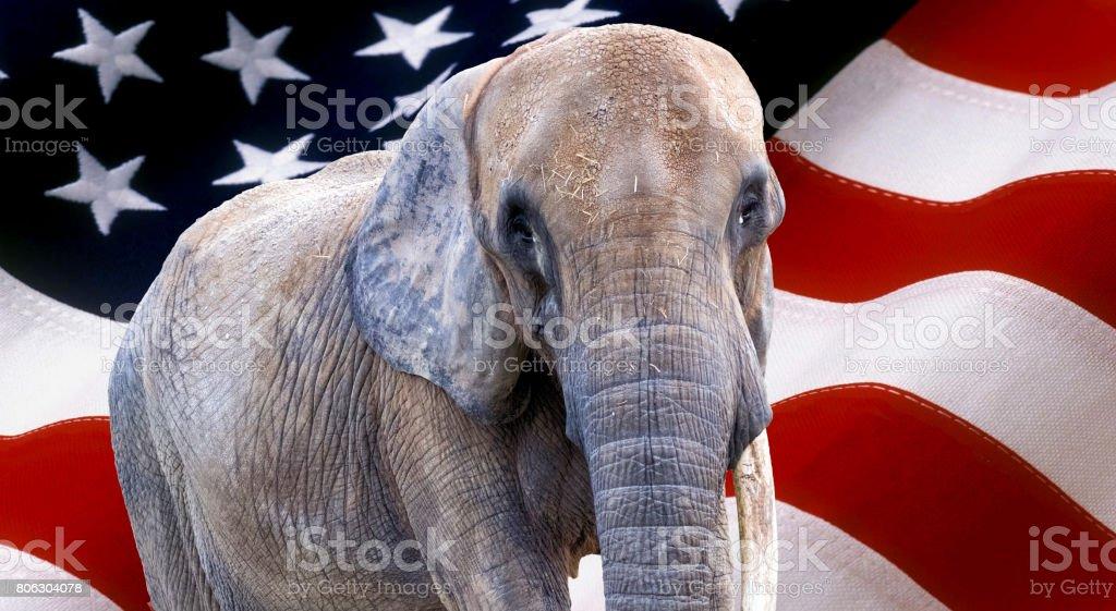 elephant on usa flag used as background stock photo