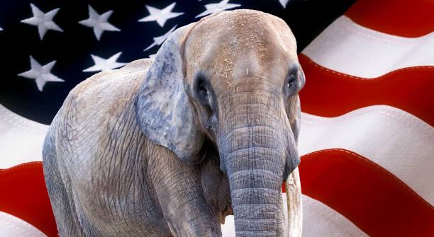 elephant on usa flag used as background - республиканская партия сша стоковые фото и изображения