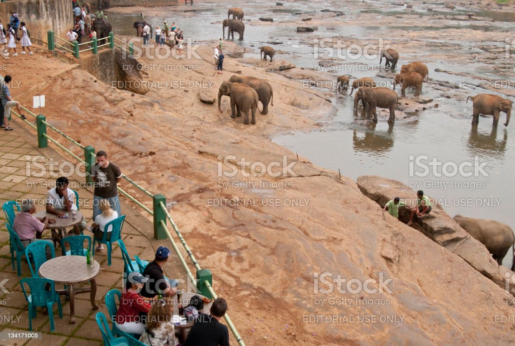 Elephant Orphanage stock photo