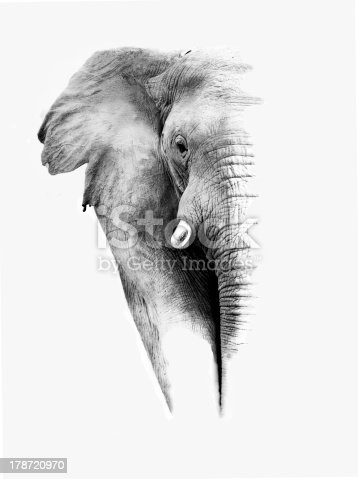 istock Elephant (Artistic Processing) 178720970