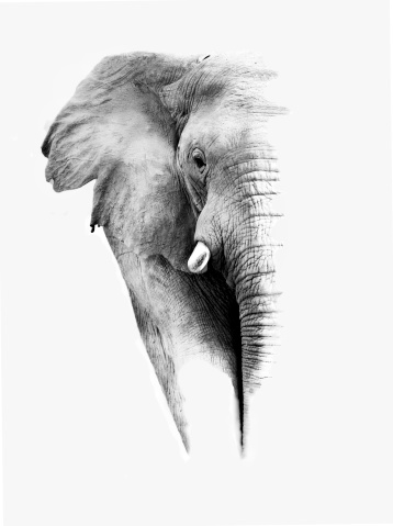 istock Elephant (Artistic Processing) 178720970