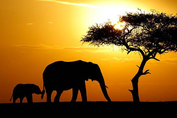 elephant - elefanten umriss stock-fotos und bilder
