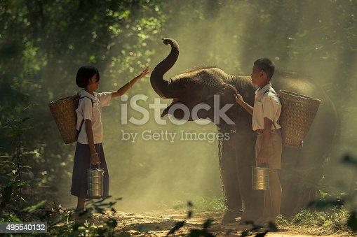 istock elephant 495540132