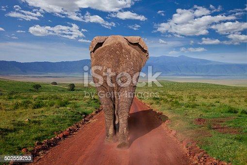 istock Elephant 502559253