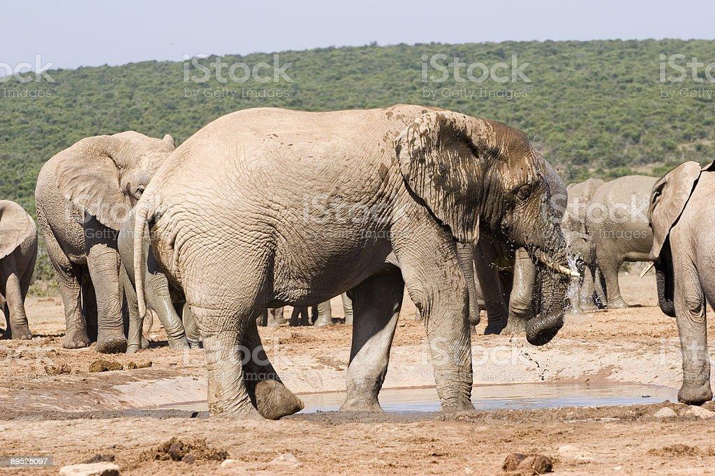 Elefante foto de stock libre de derechos