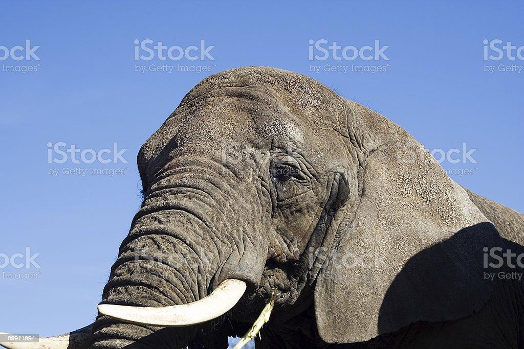 Elephant Lizenzfreies stock-foto
