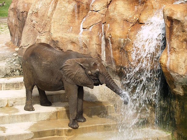 elephant - dally stock pictures, royalty-free photos & images