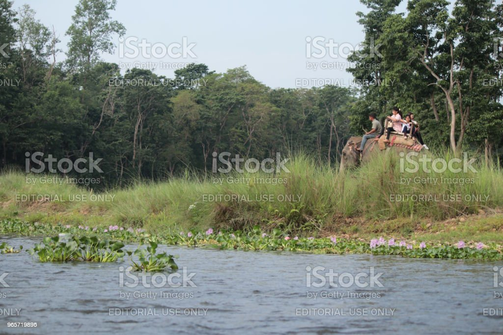 Elephant Ride Safari Tour at Chitwan National Park in Nepal - Royalty-free Abuse Stock Photo