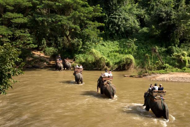 Elefant-Freileitungskreuzung – Foto