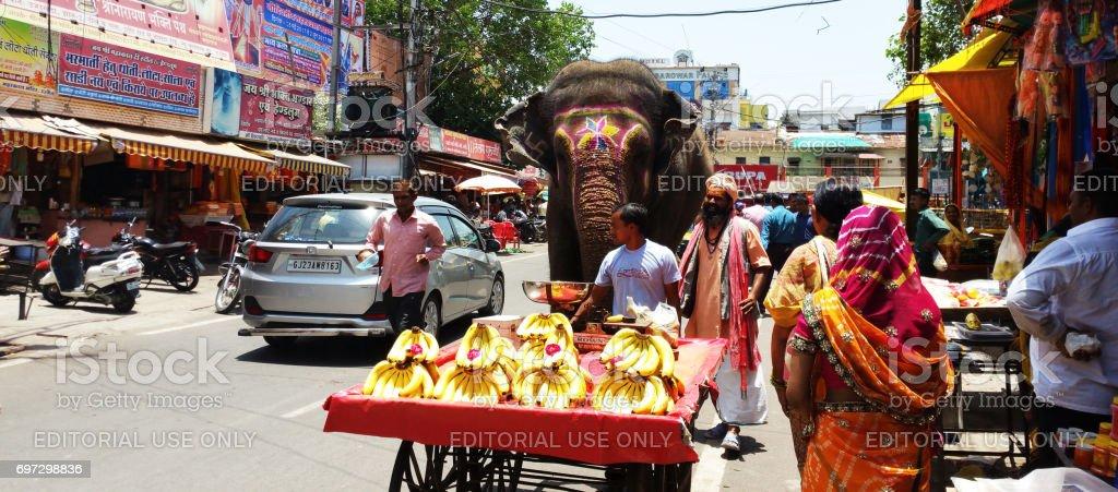 Elephant roaming on road - Street view near Mahakal Temple in Ujjain, India stock photo