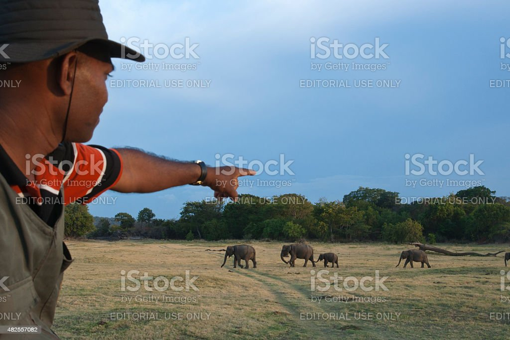 Elephant safari in Minneriya National Park, Sri Lanka stock photo