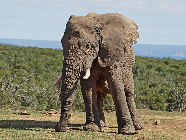 Elephant series stock photo