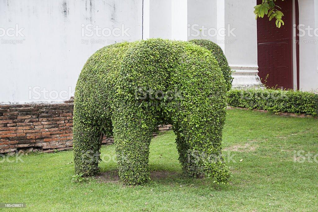 Éléphant Arbre en forme de - Photo
