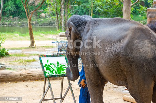 Lampang Thailand :- Oct 13, 2019 :- Elephant show painting in picture elephant and tree frame, Asia Thailand , isolated white  background