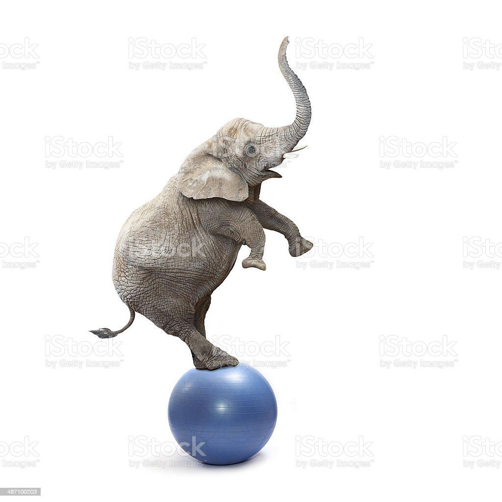 Elephant show. stock photo