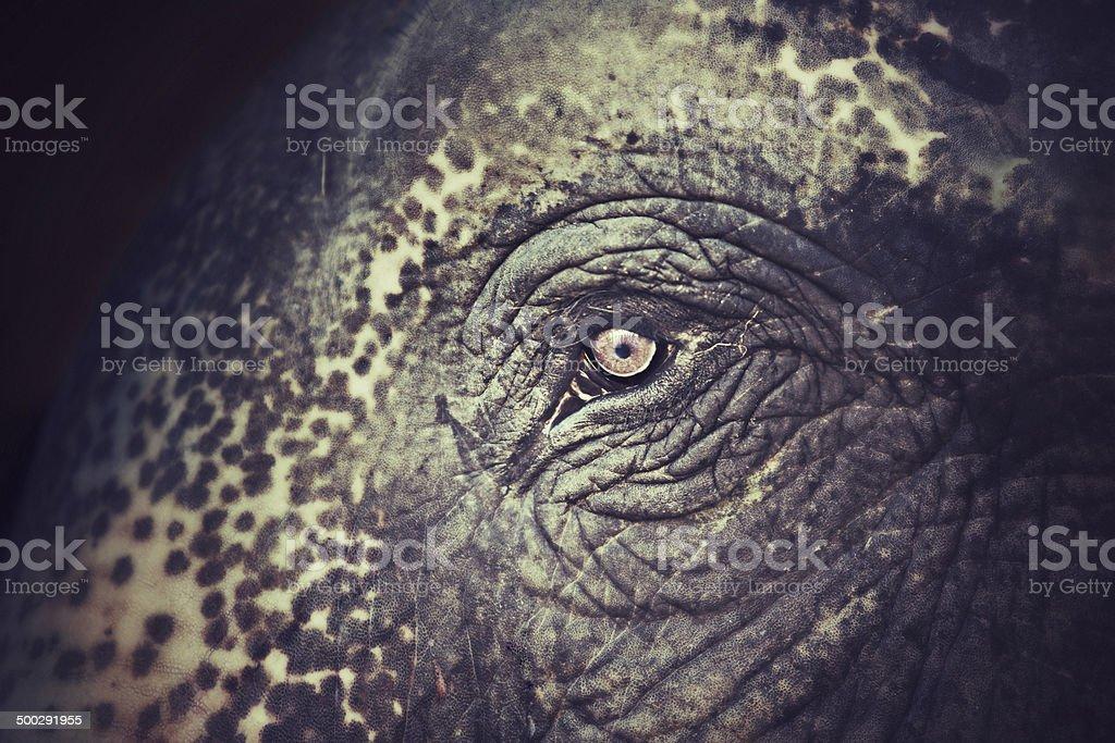 Elephant sight stock photo