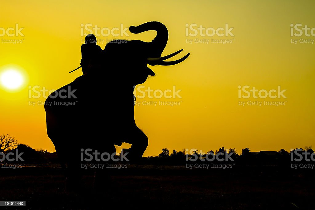 Elephant silhouette in Ayutthaya Province, Thailand stock photo