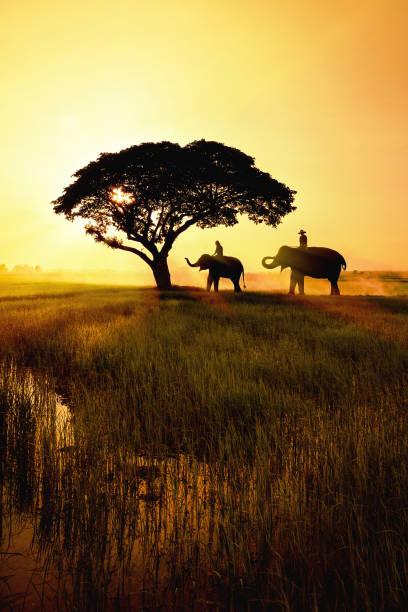 elefantensilhouette im feld - elefanten umriss stock-fotos und bilder