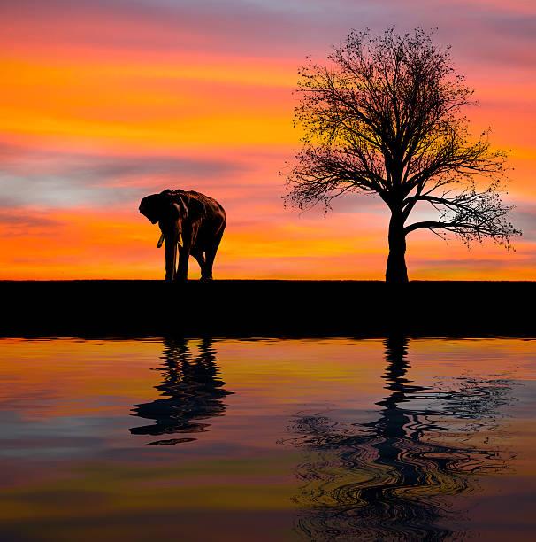 elefanten-silhouette in der wildnis - elefanten umriss stock-fotos und bilder