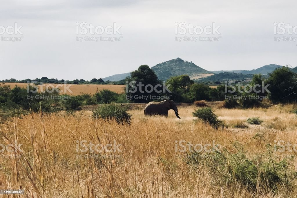 Elephant Silhouette royalty-free stock photo