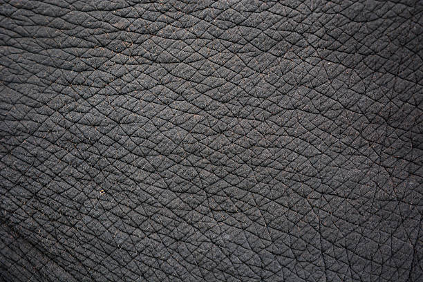 elephant skin elephant skin for background or texture cowhide stock pictures, royalty-free photos & images