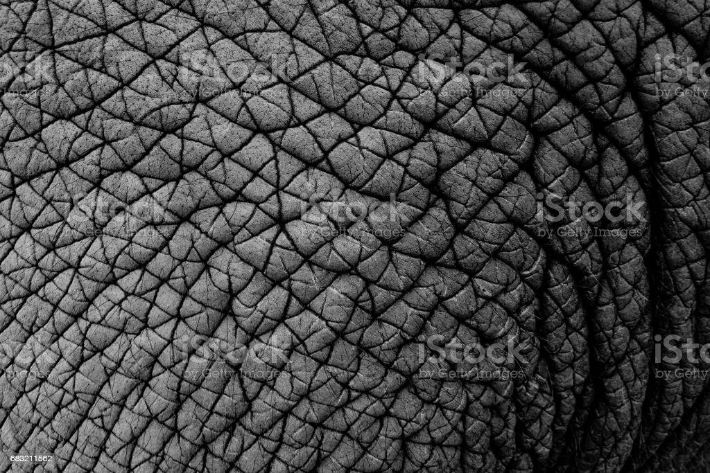 elephant skin 免版稅 stock photo