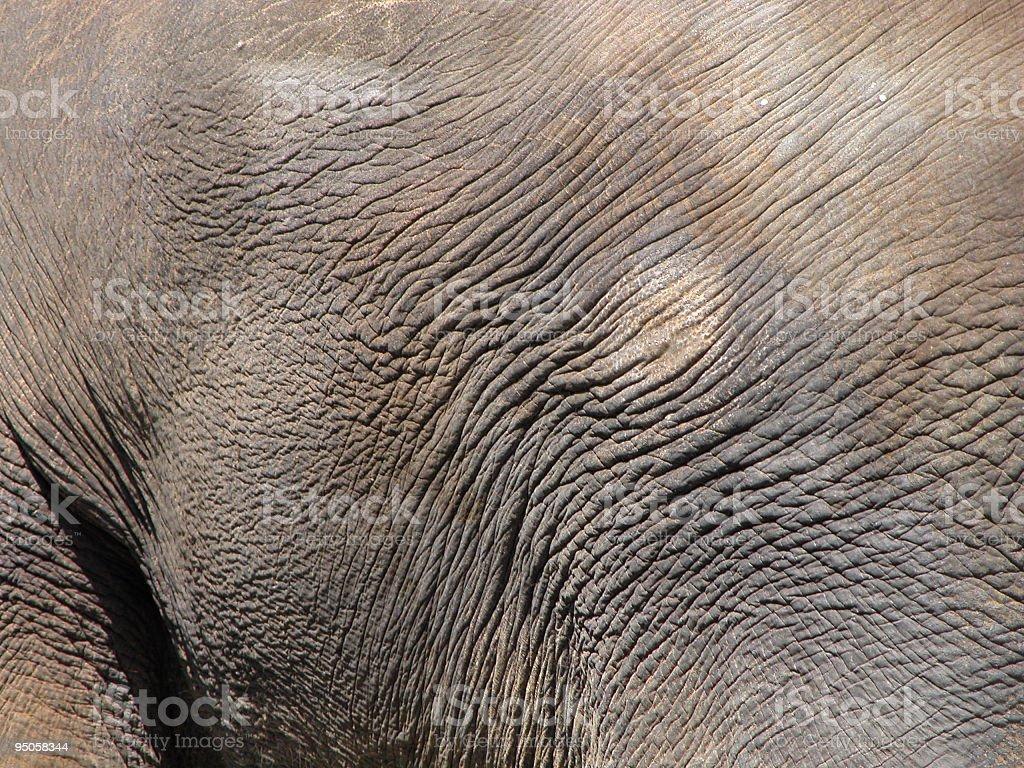 Elephant skin royalty-free stock photo