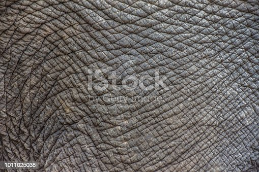 istock Elephant skin texture abstract background. Selective focus. 1011025038
