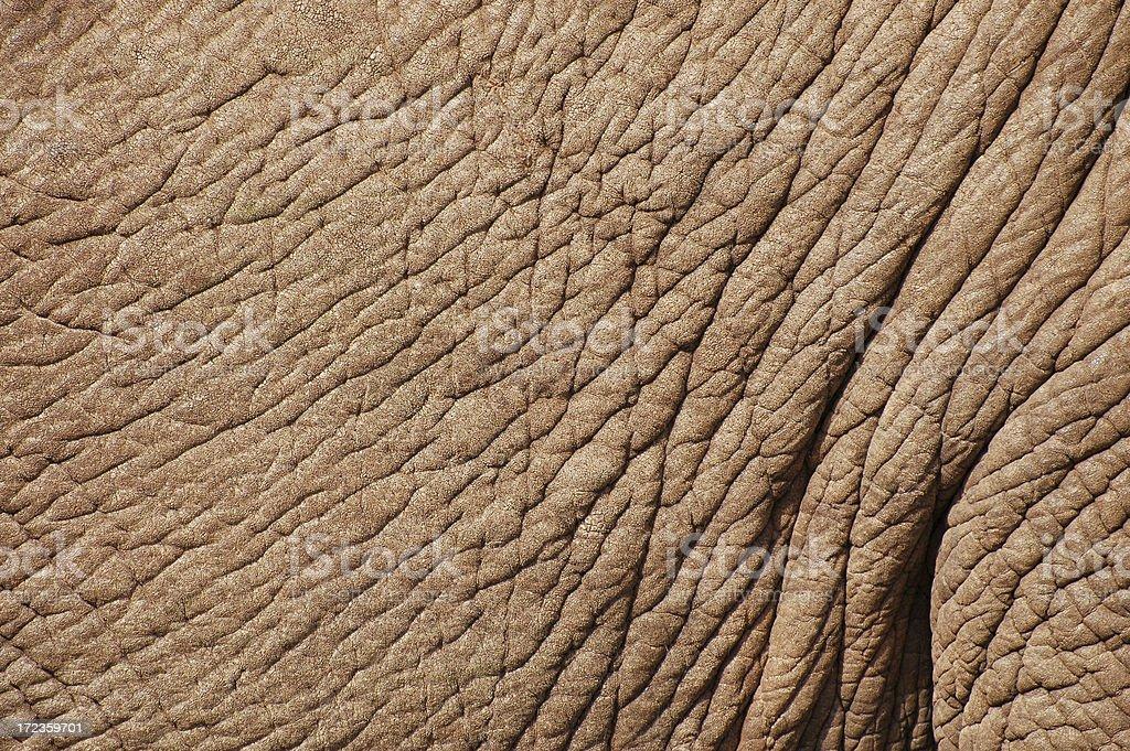 Elephant Skin Texture royalty-free stock photo