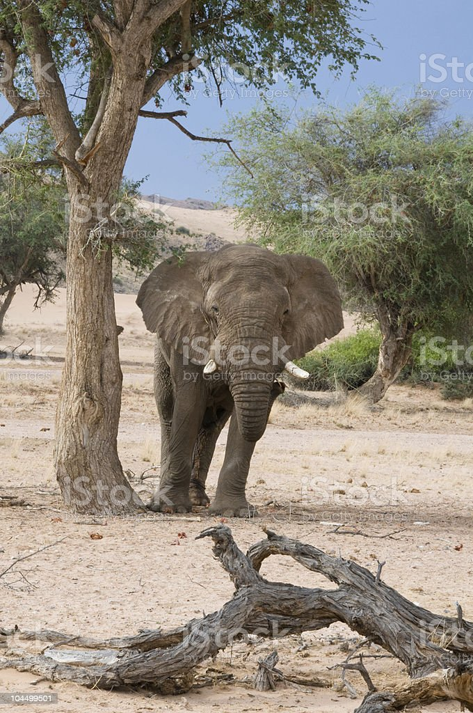 Elephant standing by tree stock photo