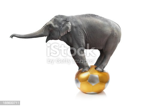 istock Elephant standing on a ball on a white background 155600711