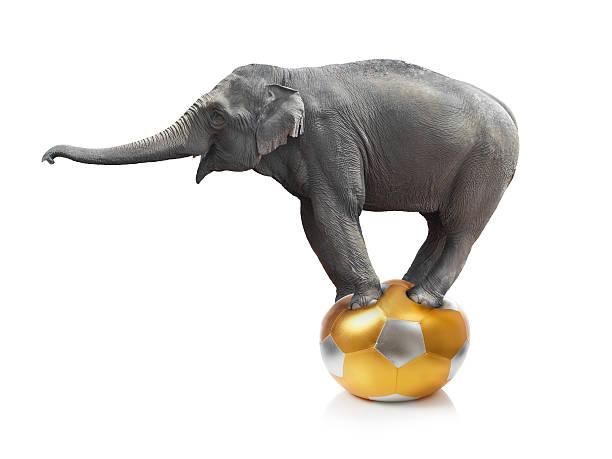 Éléphant debout sur un ballon sur fond blanc - Photo