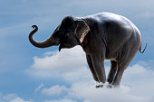 elephant standing on the clouds