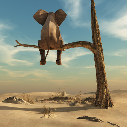 istock Elephant stands on thin branch of withered tree 613051322