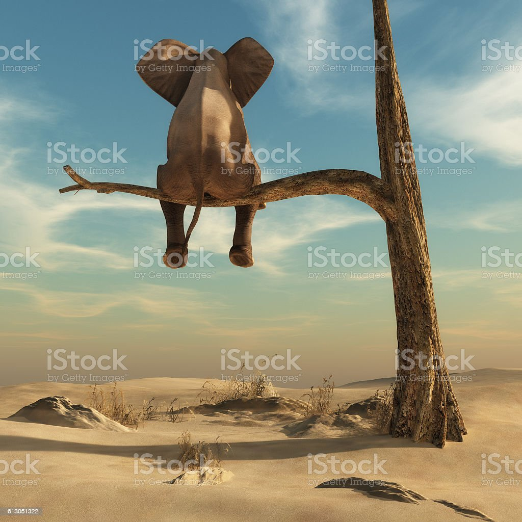 Elephant stands on thin branch of withered tree stock photo